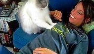 Sadece Kedi Sahiplerinin Maruz Kaldığı 16 Acayip Hareket