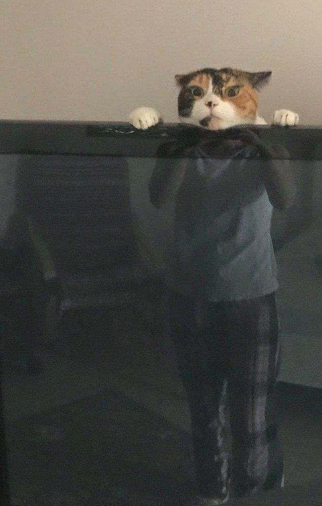 """12. """"Eşim ve televizyonun arkasında oynayan kedimiz."""""""