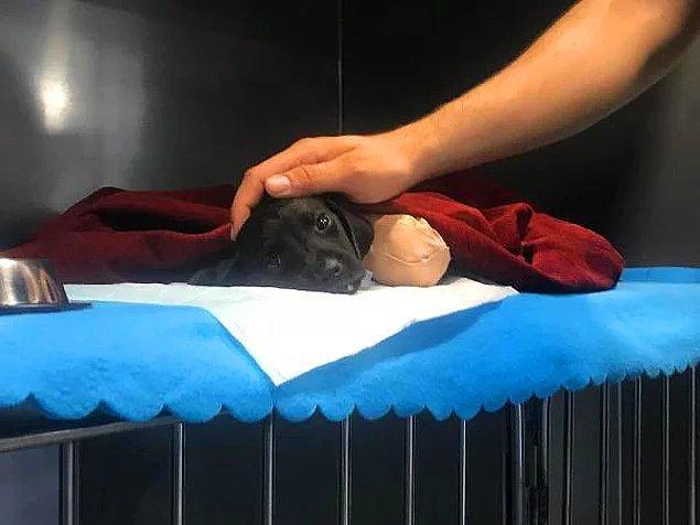 46. İçimiz yandı - Bacakları ve kuyruğu kesilen yavru köpek