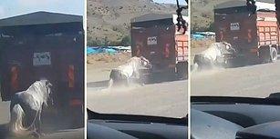 BİTMİYOR! Ankara'da Bir Kamyonun Arkasına Bağlanan Ata İşkence Ettiler!