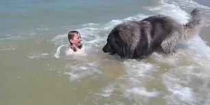 Küçük Çocuğun Tehlikeli Yerde Oynadığını Düşünen Köpeğin Muhteşem Hareketi