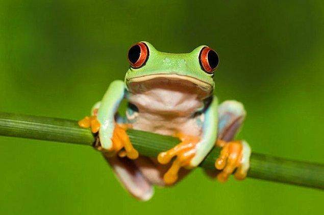 3. Kurbağa testi ne testidir?