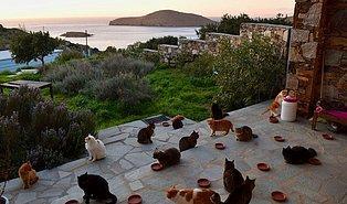 Tek Görev 55 Kediye Bakmak: Siros Adası'nda Bir Ev, Euro ile Maaş ve Tüm Masraflar