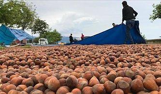 Hem Sel Hem de Dolar Vurdu: Çikolataya Zam Yolda