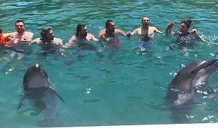 Horon Tepen İnsanlara Eşlik Eden Yunuslar
