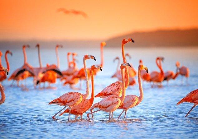 15. Pembe flamingolar, Meksika