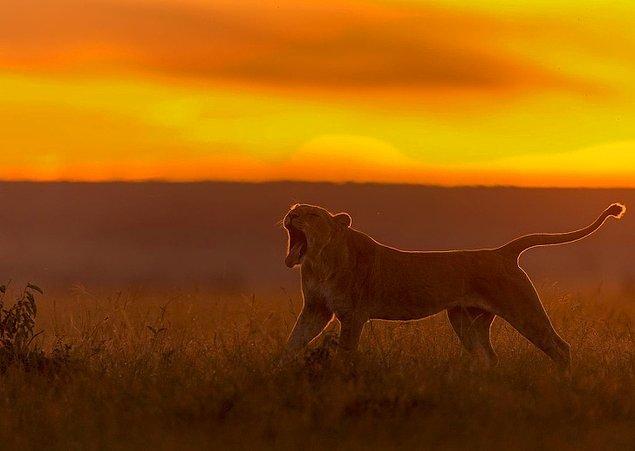 24. Doğa en harika sanatçıdır, Kenya