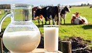 Yemi Dolarla Alan, Sütü Kuruşla Satan Çiftçi Üretimi Nasıl Sürdürecek?