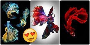 Karşınızda Uçan Balıklar! Taylandlı Fotoğrafçının Gözünden Akvaryumların Büyülü Dünyası