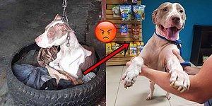 Mutlu Sonlu Bir Hikaye: Boynundaki Sıkı Zincir Yüzünden Kafasını Bile Oynatamayan Köpek Kurtarıldı!