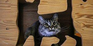 🐾 Rehabilitasyon Hizmeti de Var: Bu Otelin Konukları Sadece Kediler!