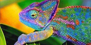 Bukalemunlar Nasıl ve Neden Renk Değiştirir?