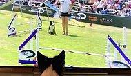 Katıldığı Yarışmayı Ekran Başından İzlerken Heyecandan Yerinde Duramayan Köpek