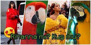 Bu Nasıl Benzerlik! 30 Fotoğrafta Kuşlara Benzetilen Güzeller Güzeli Rihanna