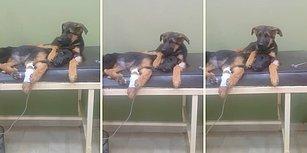 Tedavi Gören Kardeşinin Yanından Bir An Olsun Ayrılmayan Köpek