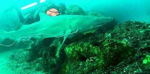 Kendi Hayatını Tehlikeye Atarak Bir Köpek Balığının Hayatını Kurtaran Dalgıç