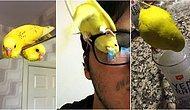 """Girdikleri Şekiller ve Bakışlarıyla Büyük Neşe Saçıp İçimizi Pozitif Enerjiyle Dolduracak 21 """"Cici Kuş"""""""