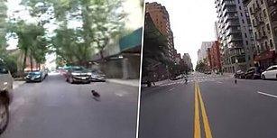 Bi' Dünya İnsanı Peşinden Koşturarak New York Caddelerini Alt Üst Eden Köpek