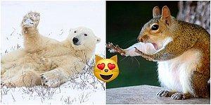 Habersiz Çekim Furyasına Hayvanlar da Dahil Oldu! İşte Komik Vahşi Yaşam Fotoğrafları Ödüllerinin Finalistleri