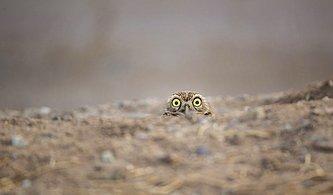 Hayvanların Doğal Yaşam Alanlarında Birbirinden Komik Halleriyle Görüntülendiği Bu Fotoğrafları Mutlaka Görmelisiniz!