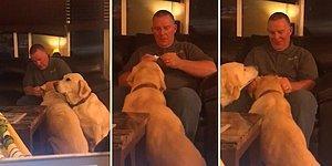 İhtiyacı Olmamasına Rağmen Arkadaşından Görüp İnsan Dostundan Kulak Damlası Damlatması İçin Sıra Bekleyen Köpek