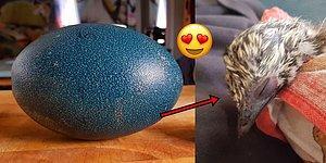 İnternetten Aldığı Yumurtalardan Biri Döllenmiş Çıkınca Dünya Tatlısı Bir Dosta Sahip Olan Adam