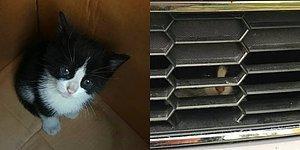 Okurken İçinizi Isıtacak Şirin mi Şirin Bir Kedi Kurtarma Operasyonu