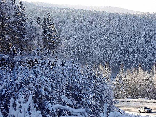 Rusya, dünyadaki ormanlık alanların %20'sine sahip.