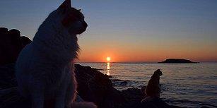 'Hayalinizdeki İşi' O Kaptı! 6 Ay Boyunca Cennet Gibi Bir Adada 55 Kediye Bakacak