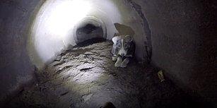 Yavru Köpek İçin Kanalizasyonda Metrelerce Sürünen Güzel İnsanlar
