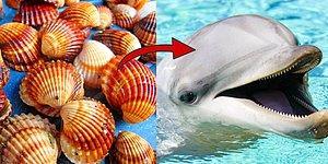 Bu Deniz Kabuğu Testine Göre Yunus musun Köpekbalığı mısın?