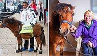 Köpeklerden Korkan Görme Engelli Genç İçin İngiltere'nin İlk Rehber Atı Olacak Digby ile Tanışın!