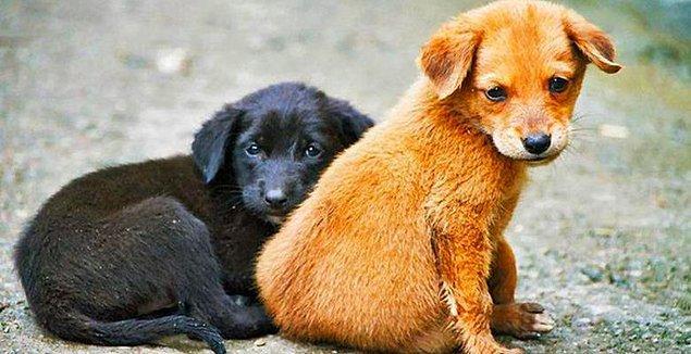 2. Avusturya en sıkı hayvan hakları kanunlarından birine sahip. 2004 yılında kabul edilen kanuna göre hayvanlara ağır korku dahil herhangi bir acı hissettirmek yasak.