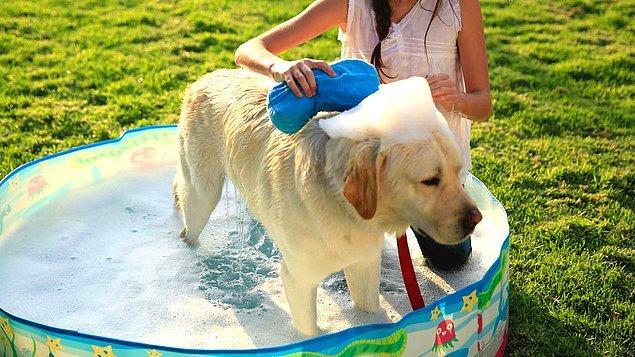 6. Yine İsviçre'de hayvan hakları kanununda evcil hayvanlar özel önem taşıyor. Örneğin daha önce köpek sahibi olmamış kişiler köpek sahiplenmeden önce ona bakabileceklerini gösteren bir sertifika sahibi olmak zorunda.