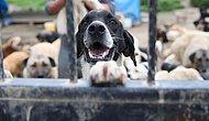 Bugün #HayvanlarıKorumaGünü: 'Kanunlarımız Yetersiz ve Onları Korumaktan Uzak'