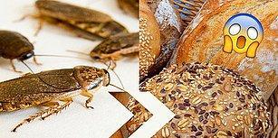 Dünyamız Buna Muhtaç Olabilir! Brezilyalı Bilim İnsanları Hamam Böceğinden Un Geliştirip Ekmek Yaptılar!