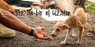 Bir An Evvel Ülkemizde de Uygulansın! Başka Ülkelerde Var Olan 16 Hayvan Koruma Yasası