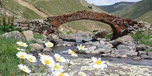 Şaşırdık mı, Alıştık mı? Gümüşhane'de 300 Yıllık Tarihi Kemer Köprü Ortadan Kayboldu!