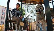 İşkence Edildikten Sonra Ölüme Terk Edilen Köpek Şimdi Görme Engellilere Rehberlik Ediyor!
