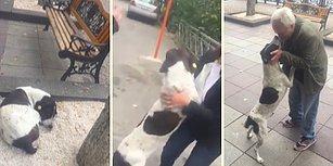 3 Yıl Sonra İnsan Dostuna Kavuşan Köpeğin Mutluluktan Havalara Uçtuğu Efsane Anlar