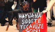 Hayvana Vahşet Bitmiyor: Tekirdağ'da Bir Köpeğe Tecavüz Edildi ve Öldürüldü İddiası