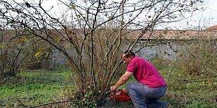 6 Dönümlük Bahçedeki Fındık Ağaçlarını Kesti: 'Onlar Düşmüş Brunson, Suriye Derdine Köylüyü Düşünen Yok'