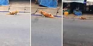 Yiyecek Alabilmek İçin Engelli Numarası Yapan Sahtekar Köpek