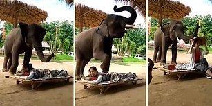 Müşterilerine Mükemmel Bir Masaj Deneyimi Sunan Fil: Dumbo