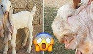 Görüldüğü Zaman ''Nesin Sen?'' Diye Sorma İhtiyacı Hissettiren Birbirinden İlginç 20 Hayvan