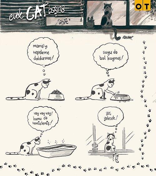 Evde Cat Başına Kedi Arifenin Ev Hayatına Tebessüm Ederek Tanık Olacağınız 13 Karikatür 13