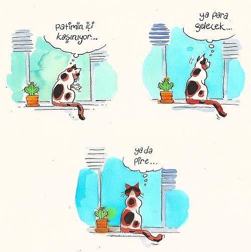 Evde Cat Başına Kedi Arifenin Ev Hayatına Tebessüm Ederek Tanık Olacağınız 13 Karikatür 39