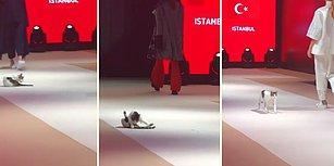Podyumda Yürüyen Modellerin Arasına Karışarak Moda Dünyasına İmzasını Atan Kedi