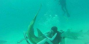 Kendi Hayatını Tehlikeye Atarak Kancaya Takılmış Köpek Balığının Hayatını Kurtaran Dalgıç