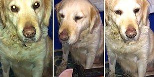 7 Yıl Evde Bakıldıktan Sonra Terk Edilen Köpeğin İnsanın İçini Acıtan Durumu